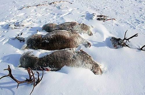 Абориген не браконьер | «Россия для всех»
